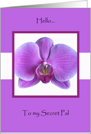 Orchid Secret Pal Card