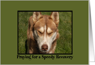 Speedy Recovery Puppy card