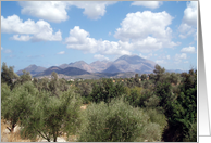 Olive Grove Mountain Scenic card
