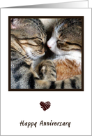 Cat Love Anniversary Card