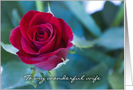 Red rose - Happy Birthday to my Wife card