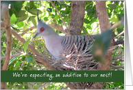 Pregnancy announcement - crested pigeon sitting on nest card