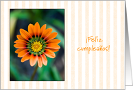 orange gazania - Happy Birthday in Spanish card