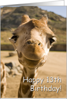Smiling Young Giraffe - Happy 13th Birthday card
