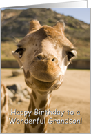 Smiling Young Giraffe - Happy Birthday Grandson card