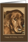 Birthday, Sister, Golden Irish Dog card