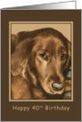 Birthday, 40th, Golden Irish Dog card