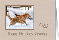 Birthday, Grandpa, Golden Retriever Dog in Snow card