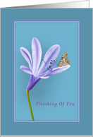 Thinking of You, Religious, Lilac Daylily Flower and Butterfly card