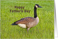 Father's Day, Canada Goose Bird card