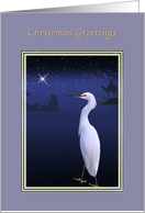 Christmas, Nativity, Egret Bird, Star card