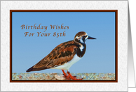 Birthday, 85th, Ruddy Turnstone Bird card