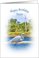 Birthday, Pastor, Great Egret Wading card