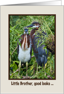 Birthday, Little Brother, Two Tricolored Heron Chicks, Humor card
