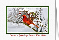 Christmas, Across the Miles, Cardinal Bird, Snow, Red Berries card