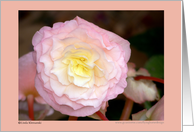 Flower Begonia Pink card
