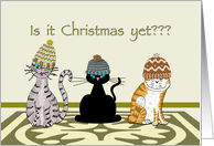 3 Cats in Knitted Hats Christmas card