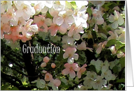 Graduation, Cherry Blossoms Watercolor card