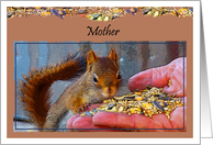 Thanksgiving, Our Mother, Red Squirrel Eating Out Of Hand card