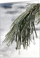 Happy Spring Icy Pine Needles card