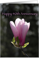 Happy 40th Anniversary - Verse - Pink Magnolia Flower card