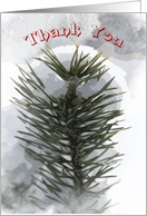 Snowy Pines - Thank You for the Gift card