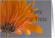 Orange Daisy Wedding Save the Date Announcement card