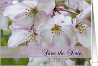 White and Pink Crab Apple Blossoms Wedding Save the Date Announcement card