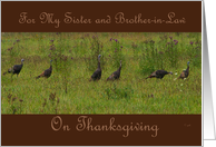 Happy Thanksgiving Sister and Brother-in-law: Turkeys card