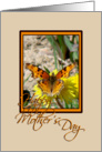 Butterfly on Dandelion card
