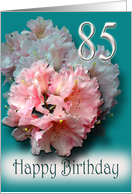 Pink rhododendron - Happy 85th Birthday Congratulations card
