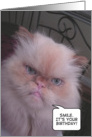 Himalayan cat smile for birthday card