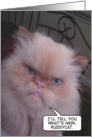 Himalayan cat what's new pussycat birthday card