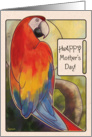 Scarlet Macaw - Mother's Day card
