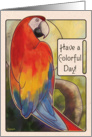 Scarlet Macaw - Colorful Day card