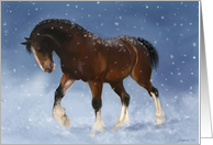 Winter Clydesdale card