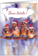 buon natale, Merry Christmas in Italian, singing sparrows card