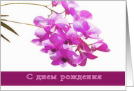 happy birthday in russian, pink orchids,flower,floral, card