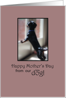 Happy Mother's Day from Our Little Dog card