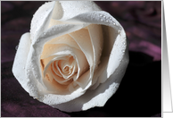 sympathy white rose card