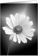 Loss of Mother-white daisy on gradient background card