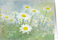 Birthday for Nana-white daisies in field with soft texture card