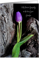 Loss of Grandpa-purple tulip with raindrops on driftwood card