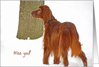 Missing You-Irish Setter in snow card