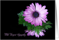 Sympathy purple daisy reflected in mirror on black card