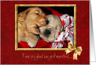 Anniversary for spouse-Golden Retrievers in red basket card