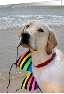Retriever with bikini for Pool Party invitation card