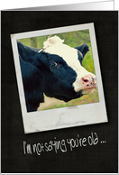 birthday humor with cow card