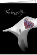 Thinking of You with butterfly on calla lily card