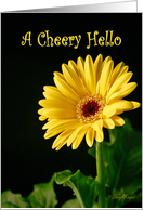 A Cheery Hello Greeting Card with a Yellow Gerbera Daisy card